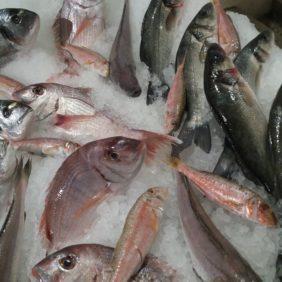 Pêche Française